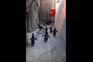 Video: ¡En busca de los Pingüinos!