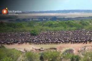 Los atractivos de la reserva natural Masái Mara de Kenia