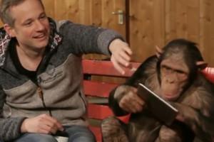 Tres chimpancés se sorprenden con unos particulares trucos de magia