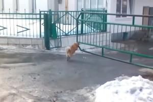 Este tierno perrito sabe cómo proteger su hogar