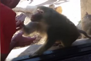 Truco de magia deja a mono con la boca abierta