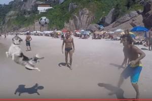 Perro juega a que la pelota no caiga