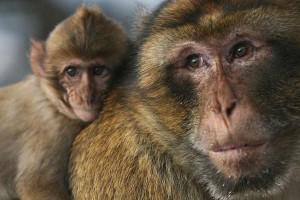 ¡Una ternura! Papá mono y su bebé ¡Mira lo que hacen!