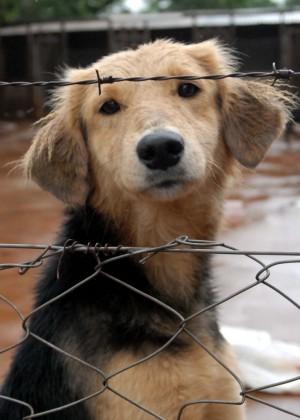 Las Condes dispone de albergue para mascotas por sistema frontal