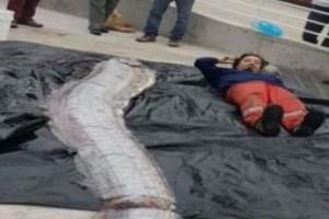 Impacto en medios internacionales por la aparición de pez de 5 metros en las costas de Iquique