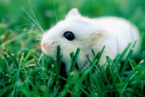 Hamster horrorizó a las redes sociales en solo 6 segundos
