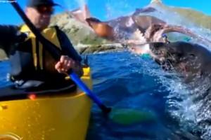VIDEO: León marino atacó con un pulpo a deportista