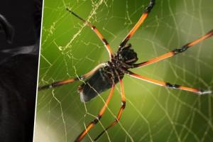 ¡Insólito! Usuarios en redes sociales impactados con hallazgo de araña con cabeza de perro