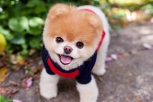 Falleció el adorable perro que tenía millones de seguidores en la red